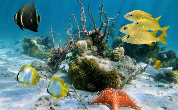 Top 10 des activités à faire en Guadeloupe - Découvrez une faune et une flore exceptionnelles