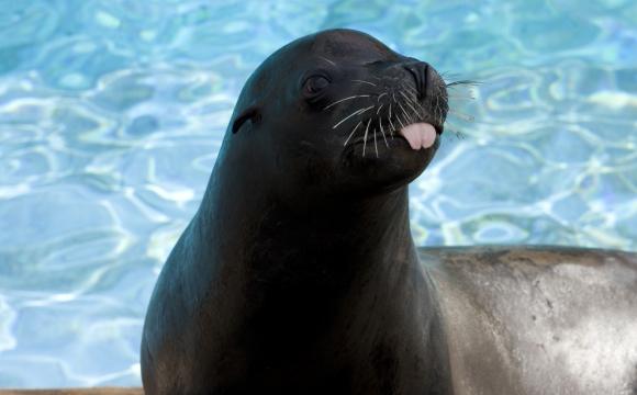 10 activités gratuites à faire à New-York - Admirer le New York Aquarium