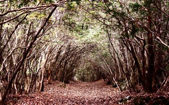 10 lieux qui font frissonner - La forêt d'Aokigahara