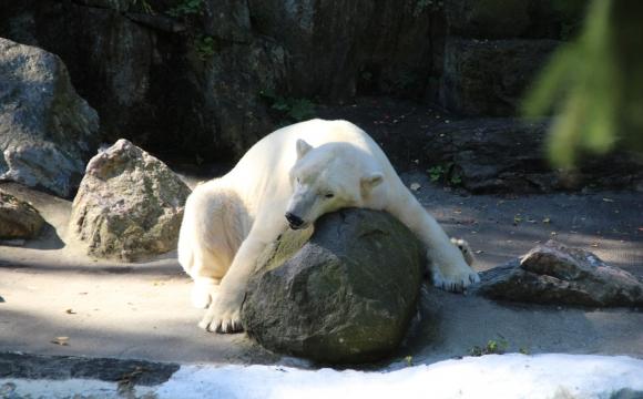 10 activités gratuites à faire à New-York - Découvrir le zoo du Bronx