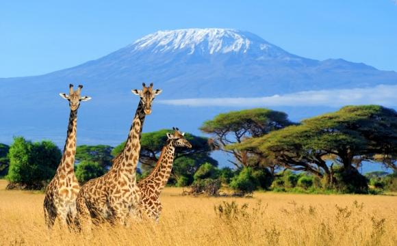 Top 10 destinations soleil en hiver  - Le Kenya