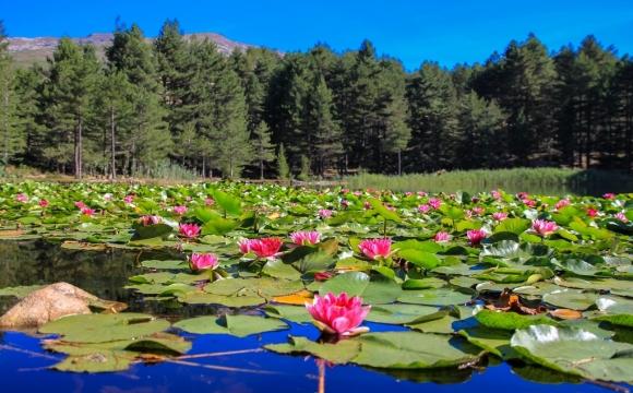 Les 10 plus beaux lacs de France - Le lac de Creno - Corse