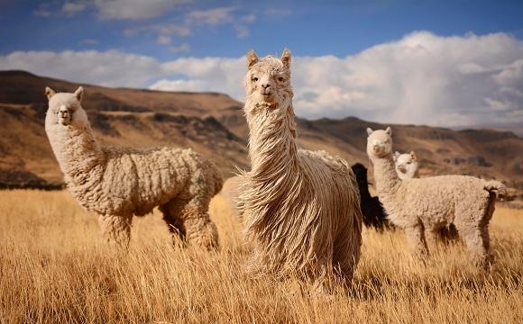 Les 10 raisons de visiter l'Argentine  - Une faune unique et diversifiée