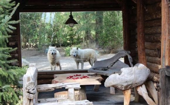 10 actvités insolites à tester durant les vacances d'été - Passer la nuit avec des loups