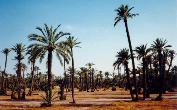 Top 10 des lieux à visiter à Marrakech - Visiter la palmeraie à dos de chameau