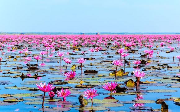 10 photos de voyage pour voir la vie en rose - Lac de Nong Dhan, Thaïlande