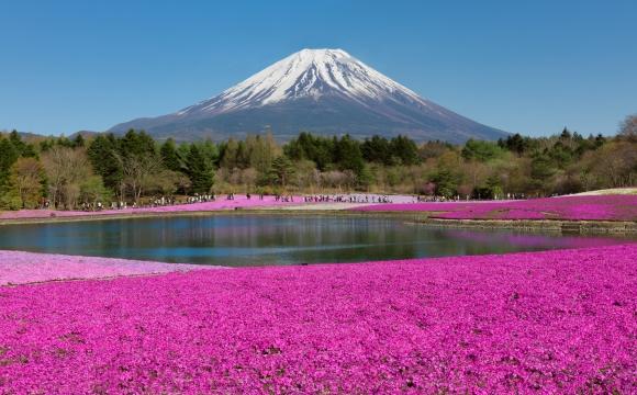 10 photos de voyage pour voir la vie en rose - Cerisiers en fleurs, Mont Fuji au Japon