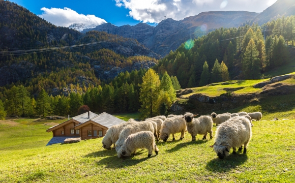 10 actvités insolites à tester durant les vacances d'été - À la découverte des bergers
