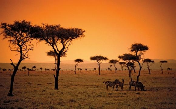 Où partir en septembre ? - Safari au Kenya