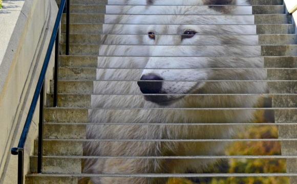 Les 15 plus belles marches du monde - The Wolf, Ottawa