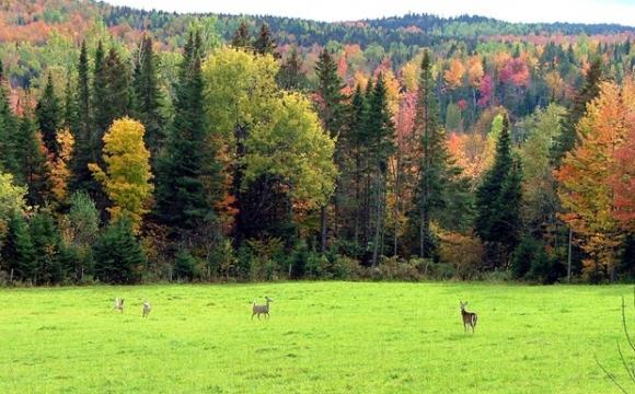 Province de Quebec