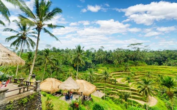 10 raisons de visiter Bali - Une faune riche