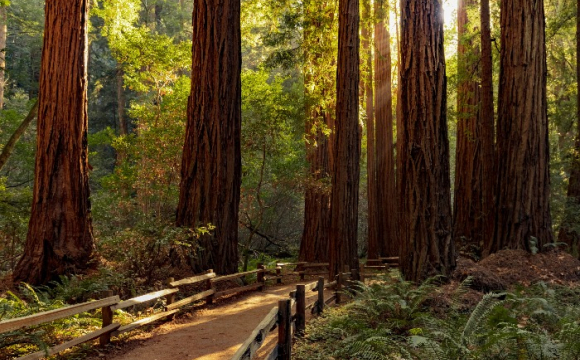 Les 15 plus beaux paysages des Etats-Unis - Séquoia National Park