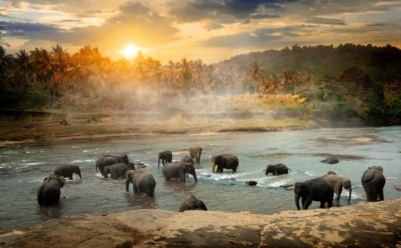 Top 10 des destinations pas chères, pour voyager sans se ruiner !  - Le Sri Lanka
