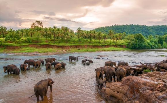 Les 10 destinations incontournables en 2015 - SRI LANKA