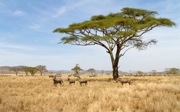 10 voyages qui vont changer votre vie - Tanzanie & Zanzibar