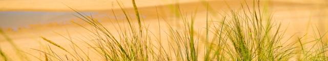 Locasun VP : ventes flash, 8j/7n en campings en Vendée proches des plages