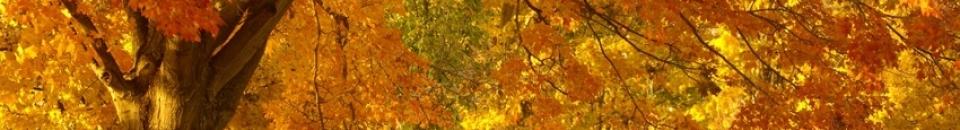 Toussaint et Ponts de Novembre